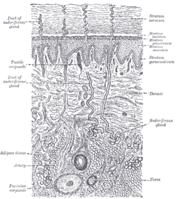 diagram of interior of 2002 dodge caravan  diagram of fish gland