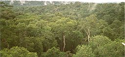 Amazon Manaus forest.jpg