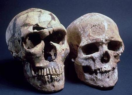 Neandertal_and_Modern_Human_Skulls