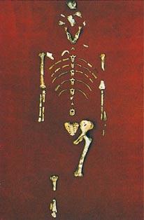 لهيكل العظمي للوسي اكتشفه العلماء ضمن الأحافير، وهو لأحد أسلاف البشر. وقد عاش هذا المخلوق قبل حوالي 3 ملايين سنة مضت تقريبًا.
