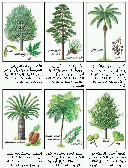 منزل سريع نقطة النهاية اسماء نباتات دائمة الخضرة Myfirstdirectorship Com
