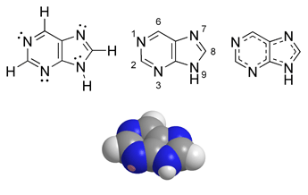 Purine chemical structure.png
