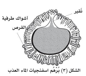 886-3.jpg