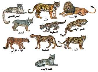 كتاب حياة الحيوان الكبرى pdf