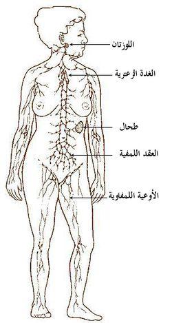 Illu lymphatic system.jpg
