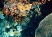 الشعاب المرجانية 180px-Coral_reefs_1.