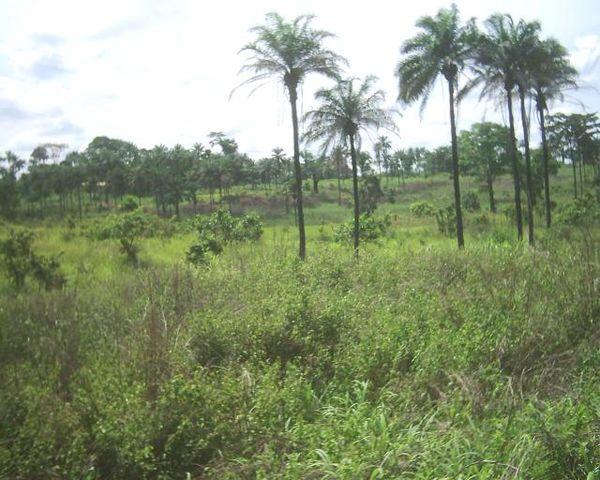 جمهورية الكونغو الديمقراطية - المعرفة
