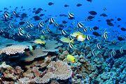 الشعاب المرجانية 180px-Nwhi_-_French_