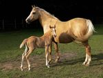Adult horse, presumably female, standing behind a baby horse. The adult horse is a golden color. The baby horse is a light red-brown color.