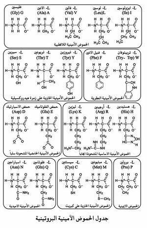جدول الحموض الأمينية البروتينية.jpg