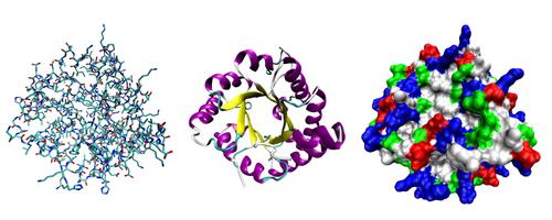 العلاقة بين بنية البروتين ووظيفته 500px-Proteinviews-1tim.png