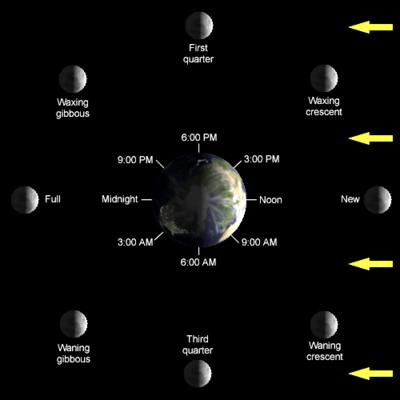 المد والجزر البحري 400px-Lunar-Phase-Di