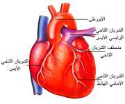 180px-Heart.jpg
