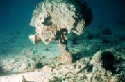 الشعاب المرجانية 180px-Coral-reef-bio