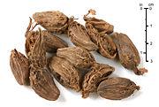 Black cardamom fruit as used as spice