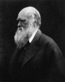Three quarter length portrait of sixty year old man, balding, with white hair and long white bushy beard, with heavy eyebrows shading his eyes looking thoughtfully into the distance, wearing a wide lapelled jacket.