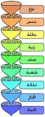 المستويات المختلفة لنظام التصنيف الحيوي.