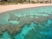 الشعاب المرجانية 180px-EilatFringingR