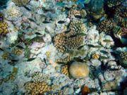 الشعاب المرجانية 180px-Coral_reefs_wi