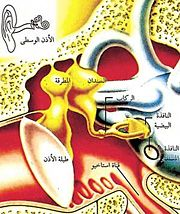 نِعـم الله ( حرف الهمزة )  180px-Earinside