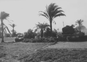 Tanks in a grove of palm trees