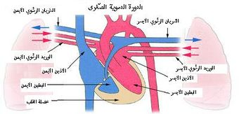 Pulmonarycirculation arabic.jpg