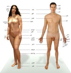 الإنسان.موسوعة الإنسان .صور لجسم الأنسان.شرح