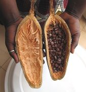 Baobab - seeds from one fruit, Adansonia digitata.jpg