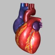180px-HeartExterior01_jpg770a3d1b-3197-4