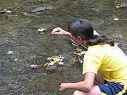 A woman takes samples of water from a river