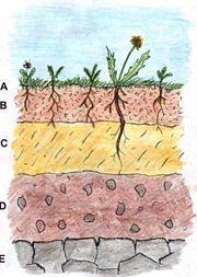 Soilprofile1.jpg
