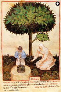الجراح الأندلسي, أبو القاسم خلف بن العباس الزهراوي (المعرف باسم Abulcasis في الغرب) كتب في القرن العاشر الميلادي عدة كتب طبية منها