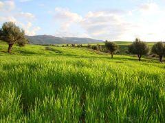 أعرف بلدك / الجزائــــــر Thumb.php?f=El_Tarf-Algerie
